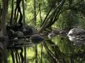 chinnar_forest