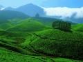 kerala-scenery