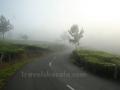 Misty munnar road