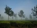 Misty munnar