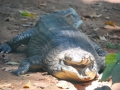 trivandrum zoo