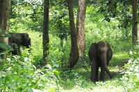 Muthanga and Tholpetty wildlife sanctuary
