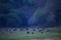 periyar_wildlife_sanctuary