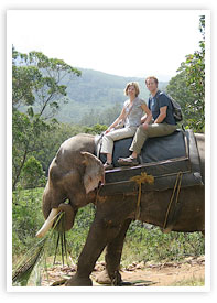 munnar_elephant-ride